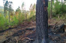 Więcej o: Pożar lasu!!!